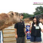ラクダを織田奈那と思ってエサやり【欅坂46】